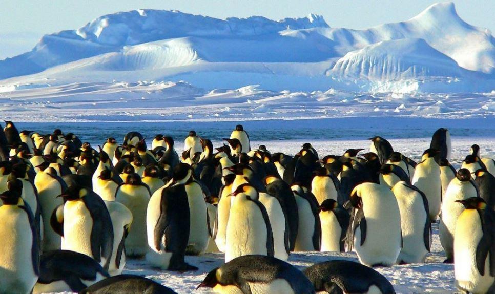 Антарктида пингвины (иллюстрация из открытых источников)