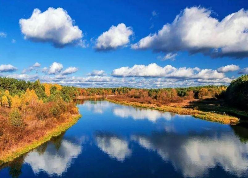 Беларусь синеокая (иллюстрация из открытых источников)
