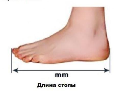 Длина стопы